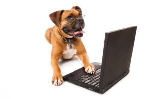 Hund med bærbar computer
