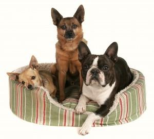 3 hunde i kurv