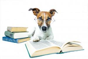 Hund med briller