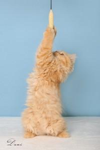 Kat der strækker sig