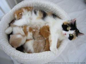 Kattemor med killinger i kurv