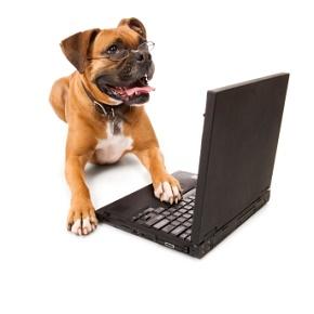 Bestilt din hundelem i dag og modtag den i morgen